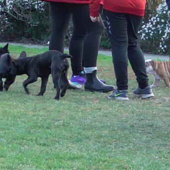 WelpensAktives Spielen in der Welpenstunde im Hundecenter Reinfeld